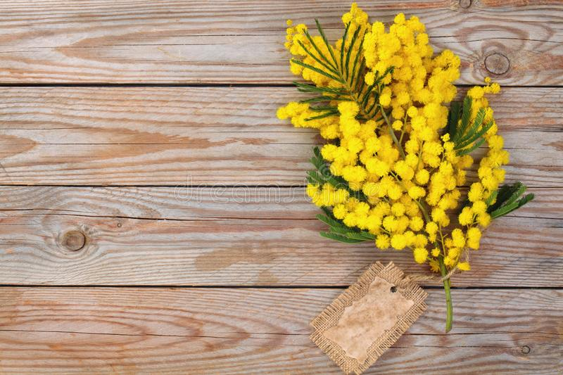 Branch of mimosa. Close up shot of mimosa flowers on wooden rustic background stock image
