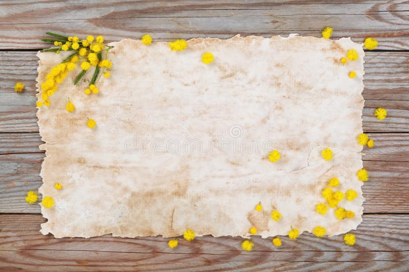 Branch of mimosa. Close up shot of mimosa flowers on wooden rustic background stock photos