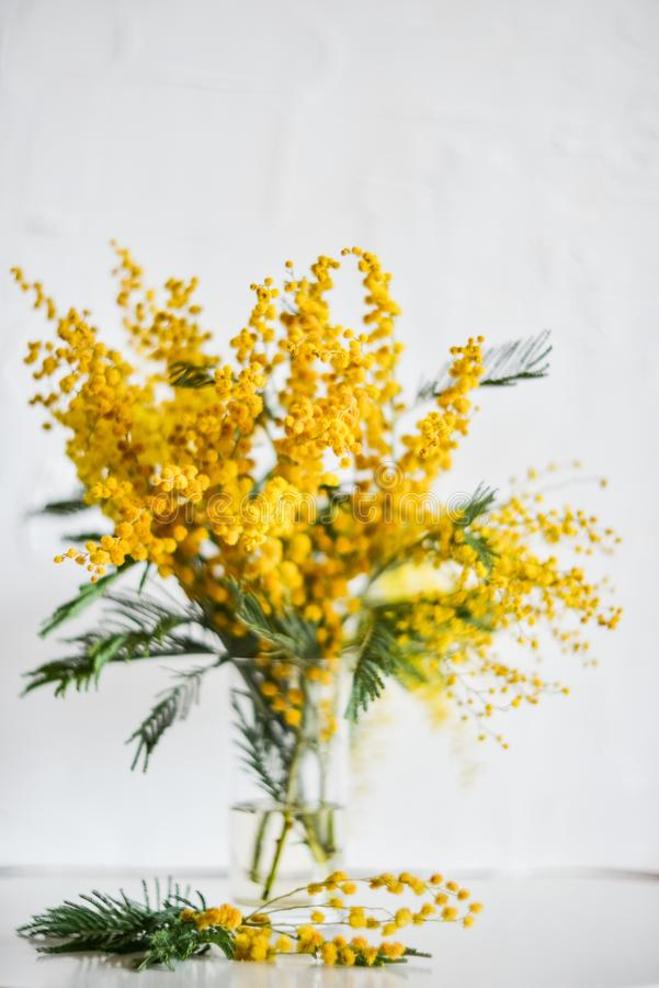 branch of Mimosa in a glass vase on the window on white background, greeting card, mockup, background for greetings on mother's d stock photo