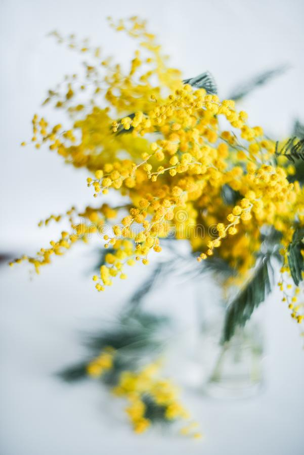 branch of Mimosa in a glass vase on the window on white background, greeting card, mockup, background for greetings on mother's d stock image