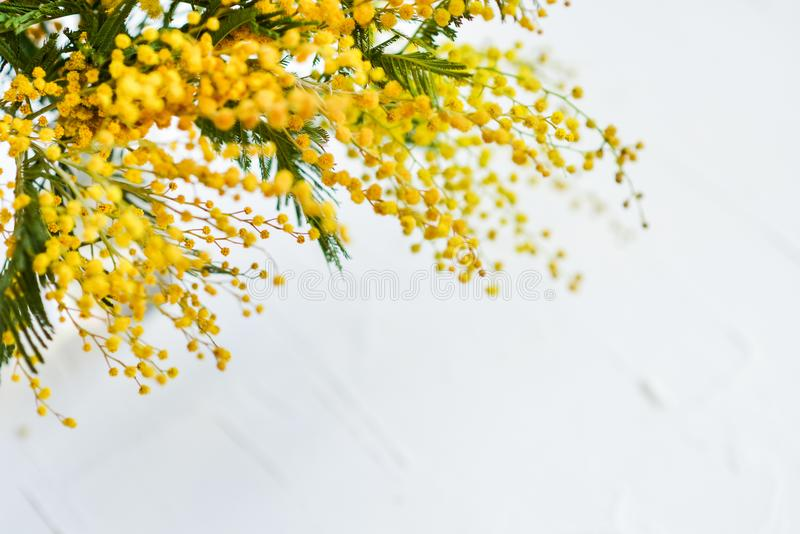 branch of a Mimosa on a light background, copyspace for your text: greeting card, blank, mockup, background for greetings on mothe stock image