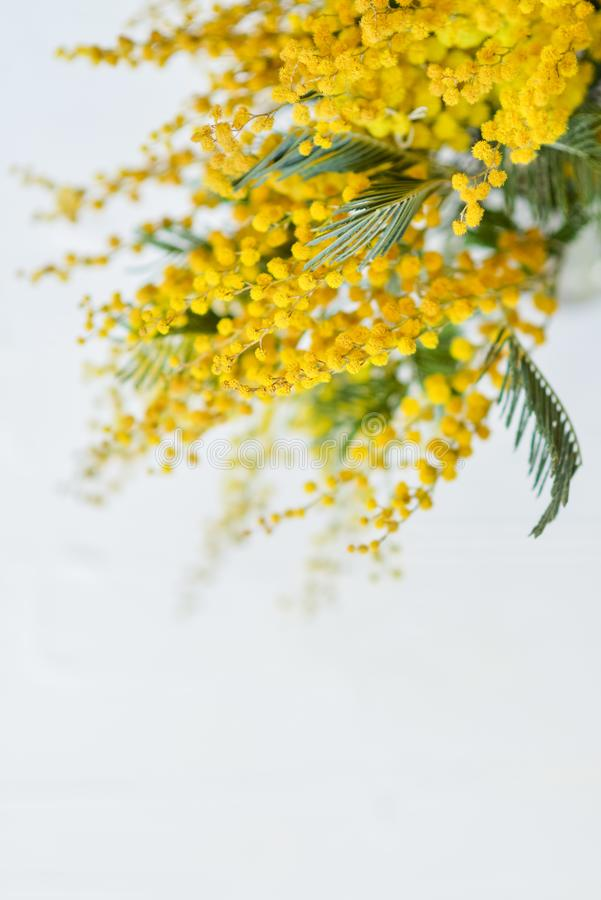 branch of a Mimosa on a light background, copyspace for your text: greeting card, blank, mockup, background for greetings on mothe royalty free stock photography
