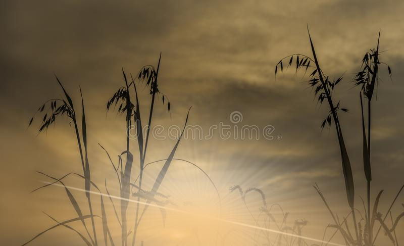 Branch of oat against of the rising sun. Above mountains, focus on plants royalty free stock images
