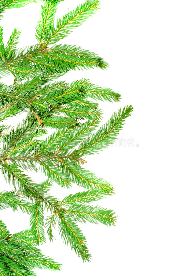 Free Branch Of A Pine. Stock Photos - 3710773