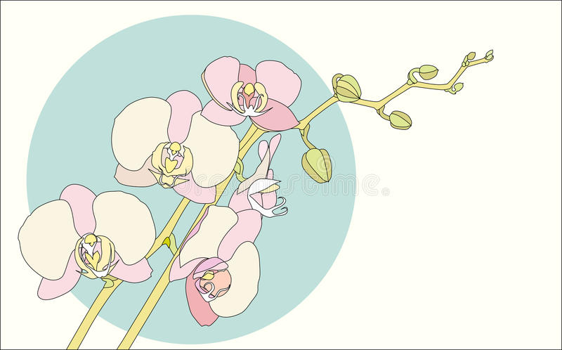 Download Branch orchid stock vector. Image of design, beautiful - 31327460