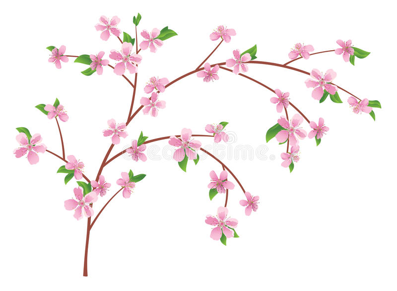 branch of peach with blooming flowers - vector stock illustration