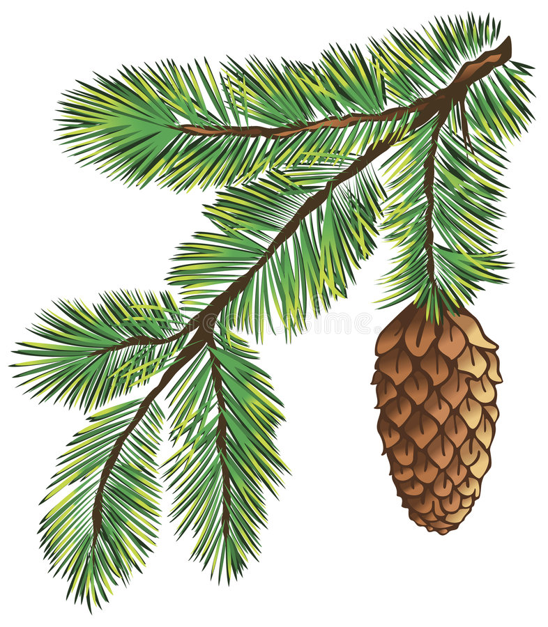 Download Branch of pine stock vector. Image of frost, background - 3550419