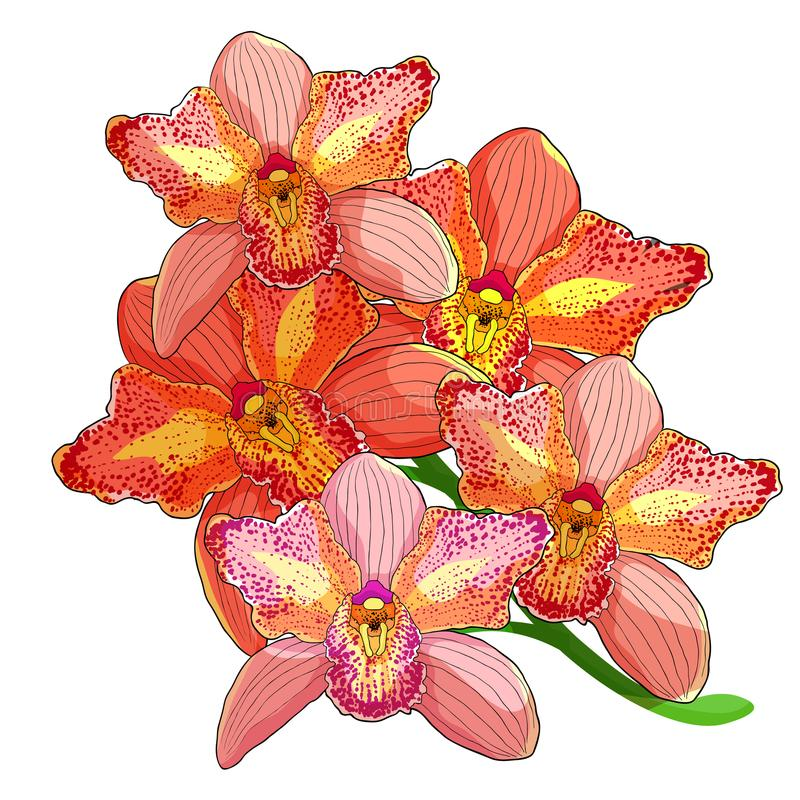 Pink Orchid Cymbidium tropical flower. vector illustration. Branch pink Orchid Cymbidium tropical flower vector illustration vector illustration