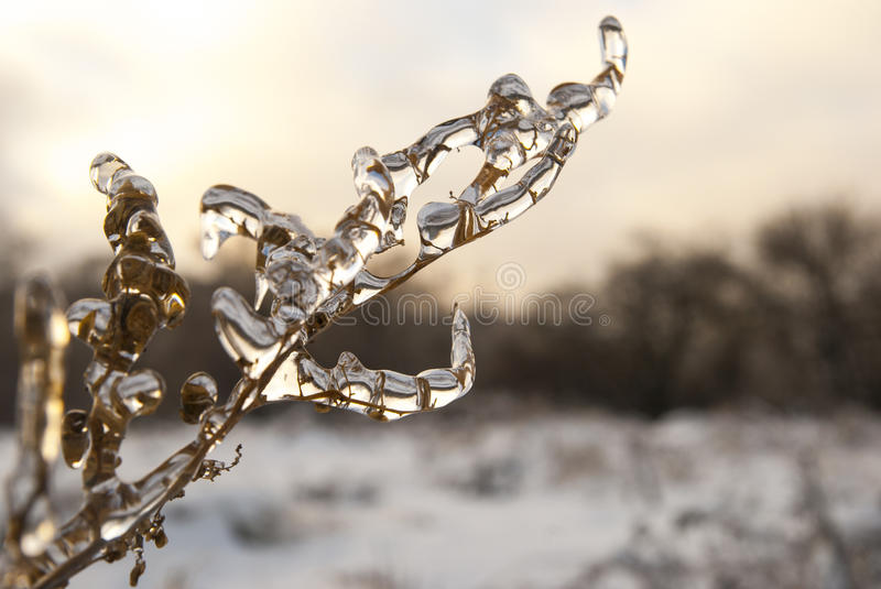 Branch of plant in the ice. Snowy winter landscape stock photo