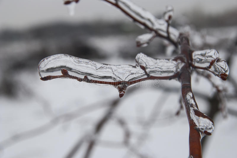 Branch of plant in the ice. Snowy winter landscape royalty free stock photos
