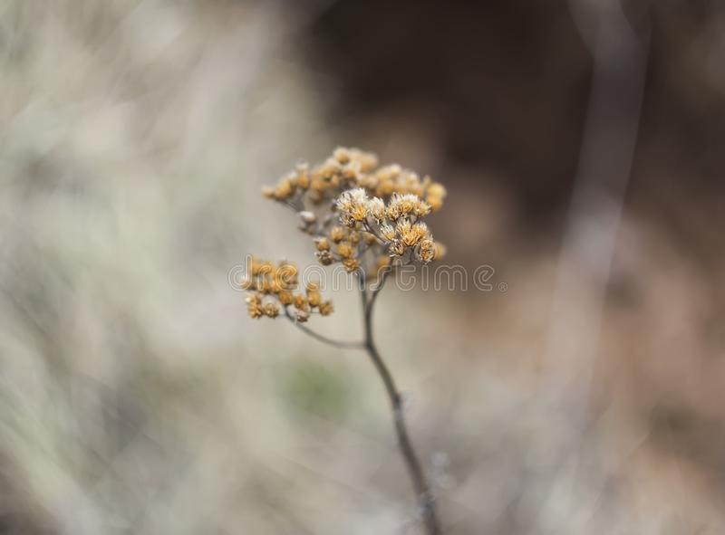 Branch of plant in spring park. Branch of a dry plant in spring park stock images