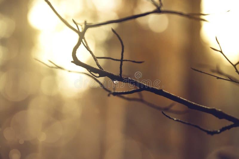Branch and raindrop stock photos