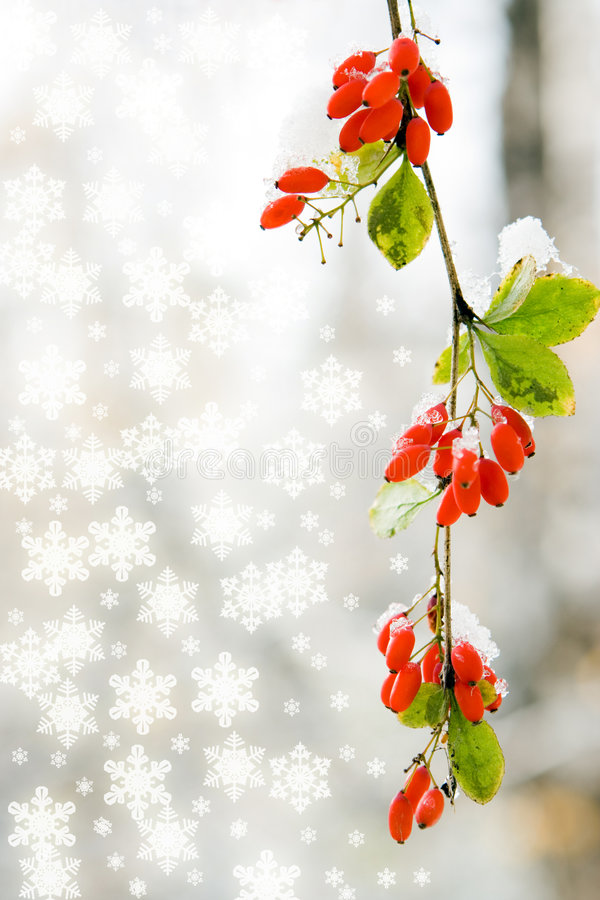 Free Branch Red Berry With Leaf Autumn Stock Image - 3757851