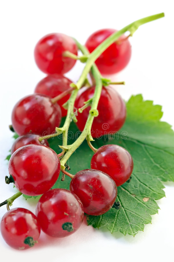 Branch Of Red Currant On White Background Stock Photos