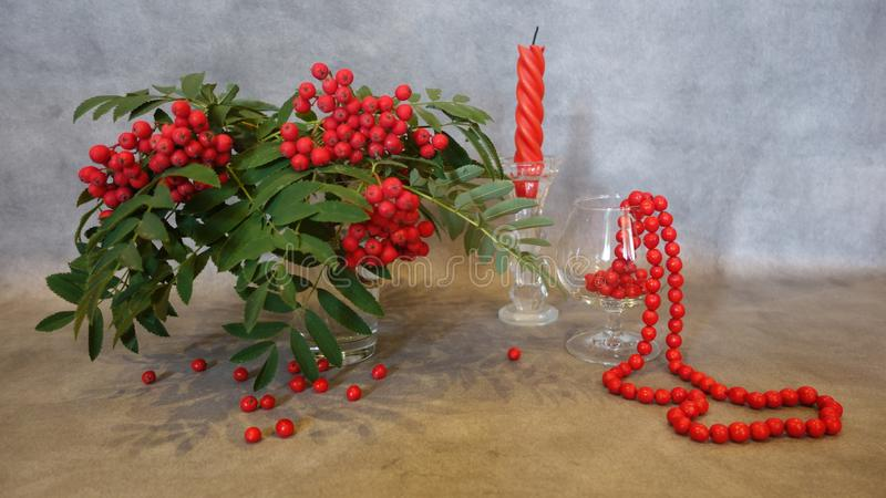 Still life of a mountain ash and towering mountain ash beads royalty free stock photo