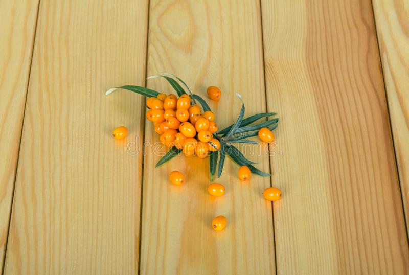 A branch with ripe sea-buckthorn berries and leaves, several berries near the background of light tree. royalty free stock photos