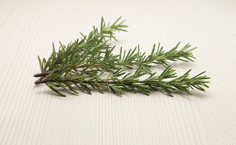 Branch Of Rosemary Royalty Free Stock Image