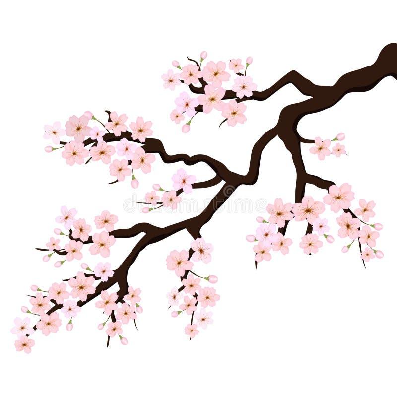 Branch of Sakura or Cherry Blossoms. Vector royalty free illustration