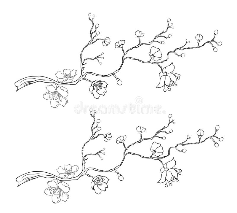 Branch of Sakura flower vector for tattoo style on isolated white background.Peach blossom illustration for coloring book.Beautifu stock photography