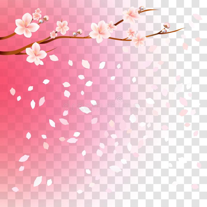 Branch of sakura with flowers and flying petals isolated on transparent gradient Pink background. Flowers of apple. Cherry stock illustration