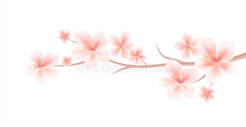 Branch of Sakura with Light Pink flowers isolated on White background. Sakura flowers. Cherry blossom. Vector EPS 10 cmyk stock photo