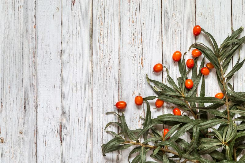 Image with sea buckthorn. stock photography