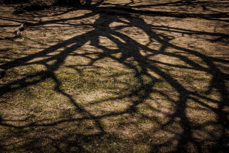 Branch shadow on the ground. Dark background of branch shadow on the ground stock photo