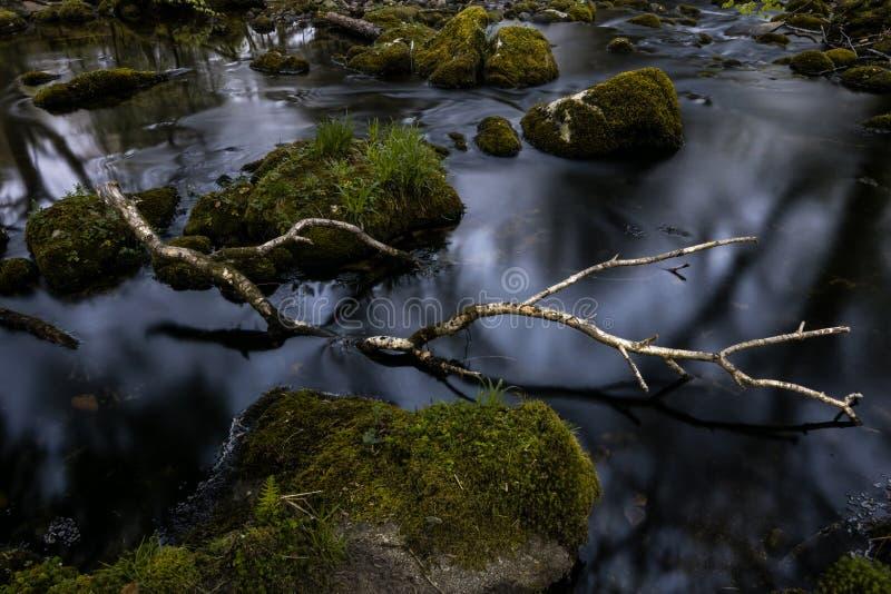 A branch of silver birch in a river stock photos