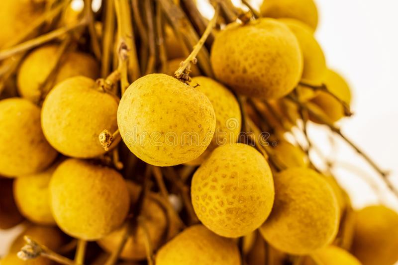 Branch of small longan berries round with thin skin of juicy heart and black bone on white background stock images