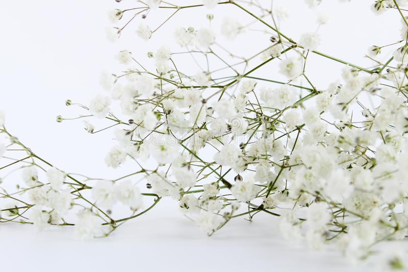 Branch small lovely white flowers background royalty free stock photos