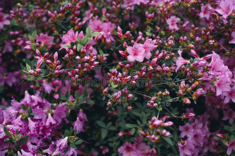 Branch of small pink flowers in foreground stock photo