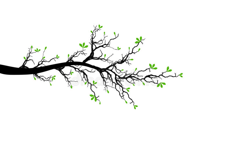 Branch of Spring Tree stock illustration