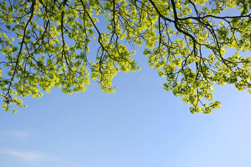 Branch of a spring tree with blue sky. Branch of a spring tree with blue sky at the background royalty free stock images