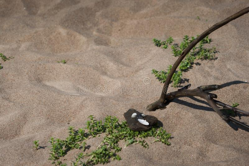 Branch and plants in sea beach sand. Branch, stones and plants in sea beach sand in a hot day royalty free stock image