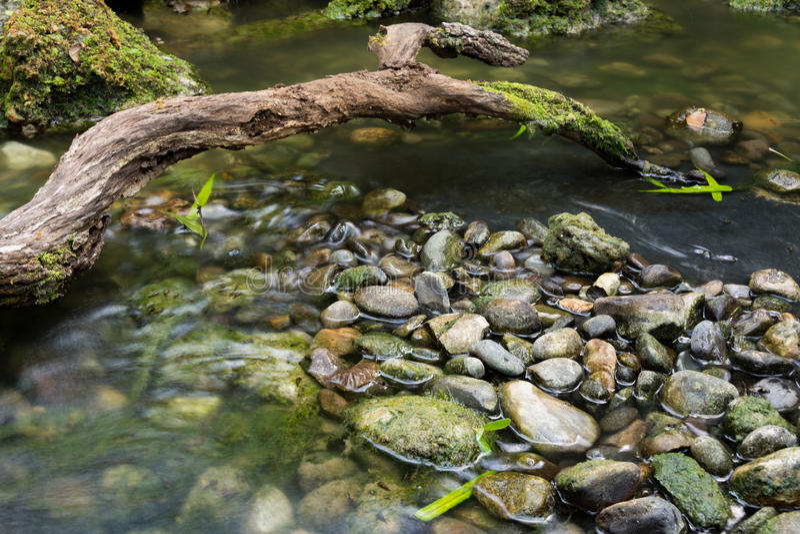 Branch stream rocks royalty free stock photo