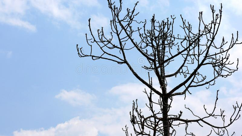 A branch that stretches to reveal the beauty of the branches of the sun. royalty free stock images