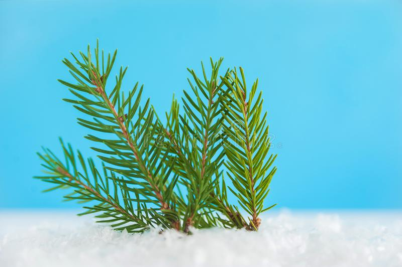 Branch thuja on blue background with copy space. Christmas tree, minimal New Year s card. Holidays, Congratulation concept. Place. For text, flat lay royalty free stock photo