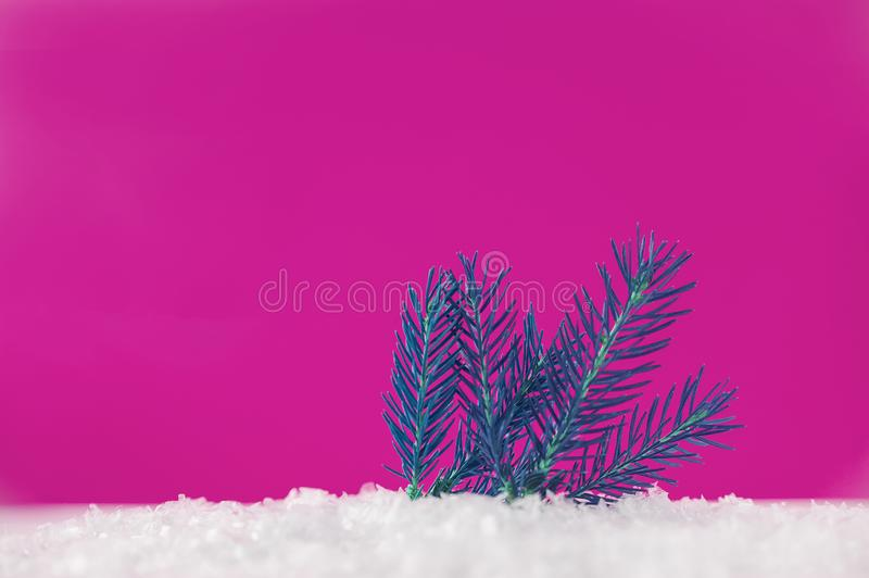 Branch thuja on pink background with copy space. Christmas tree, minimal New Year s card. Holidays, Congratulation concept. Place. For text, flat lay stock photos
