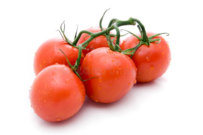 Branch tomato royalty free stock photography