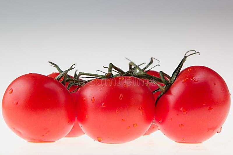 Branch tomato on a white background. Macro. Texture. Gradient. stock image