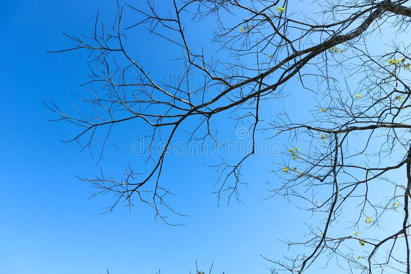 Branch or tree and blue sky royalty free stock photo