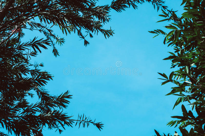 Branch of tree with blue sky stock photography