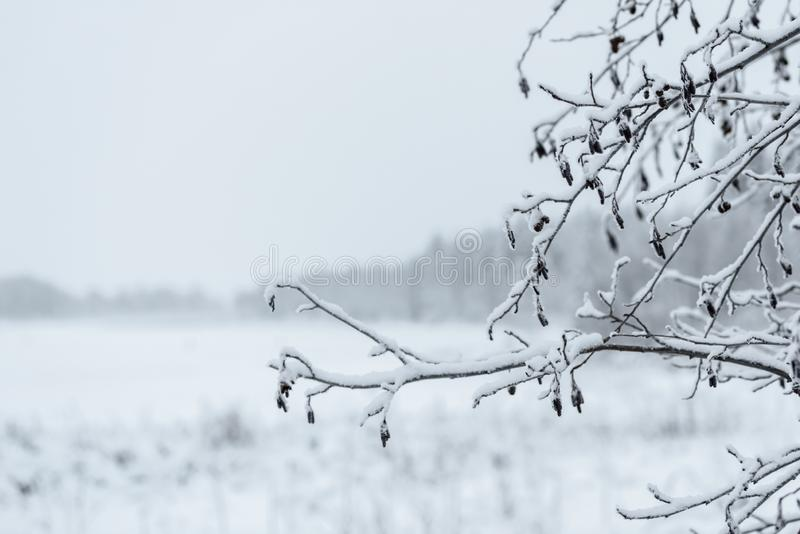 The branch of tree has covered with heavy snow in winter season at Lapland, Finland. Background, beautiful, beauty, big, blizzard, blue, christmas, clear royalty free stock image