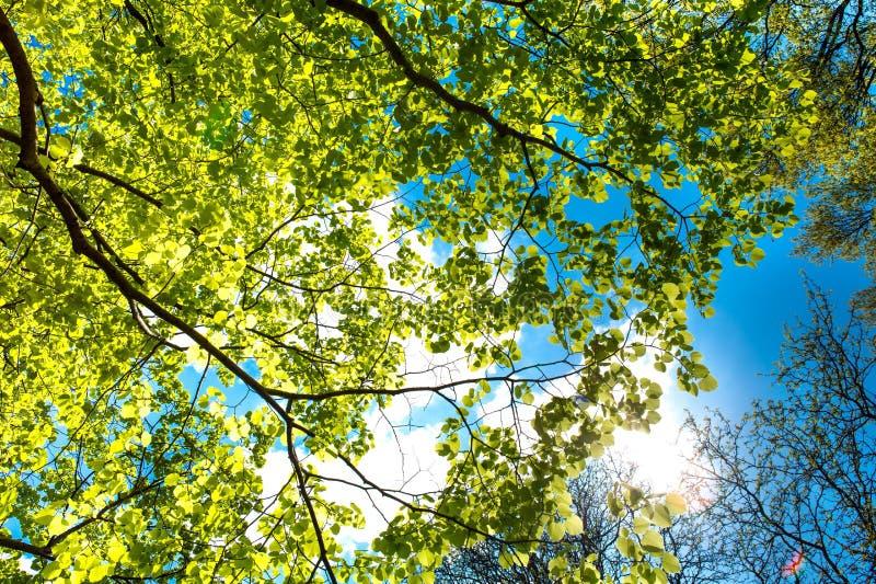 Branch, Tree, Nature, Leaf Free Public Domain Cc0 Image