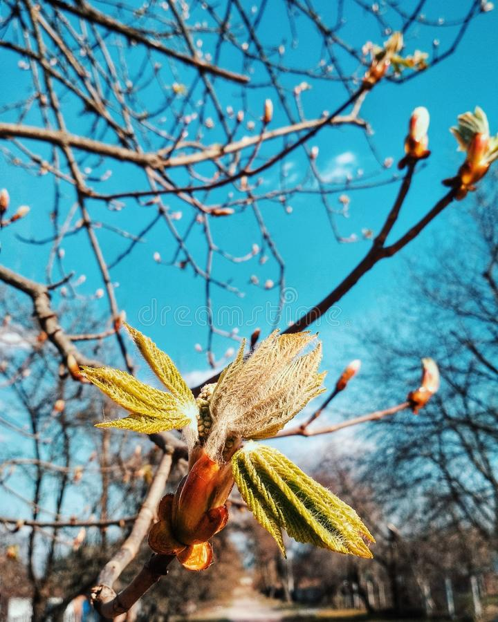 Branch, Tree, Plant, Spring royalty free stock images