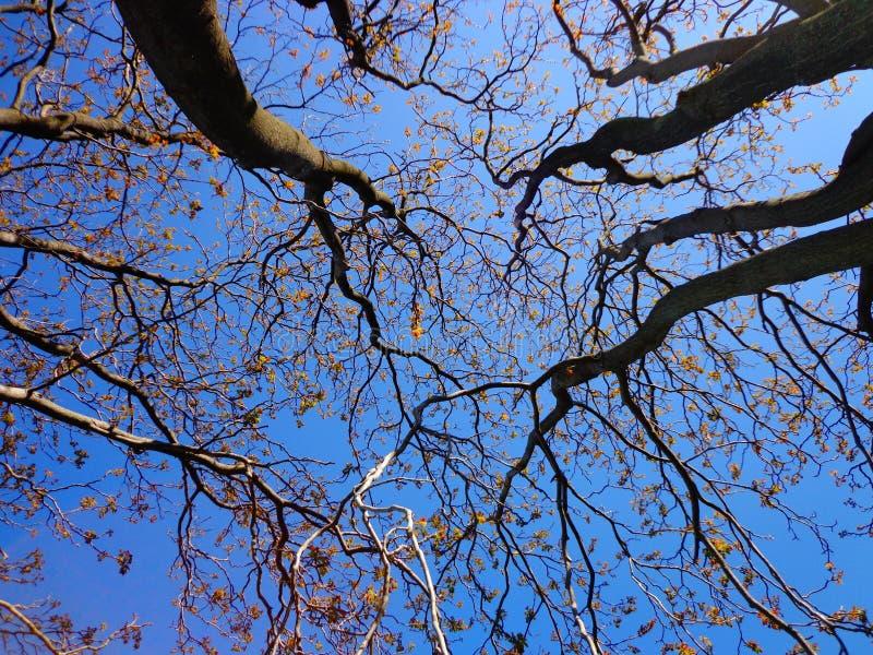 Branch, Tree, Sky, Blue stock photos