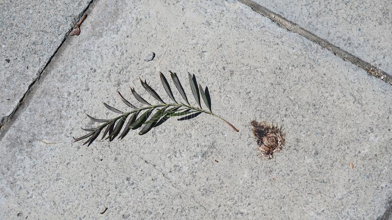 A branch of a tree and a snail on the pavement stock photo