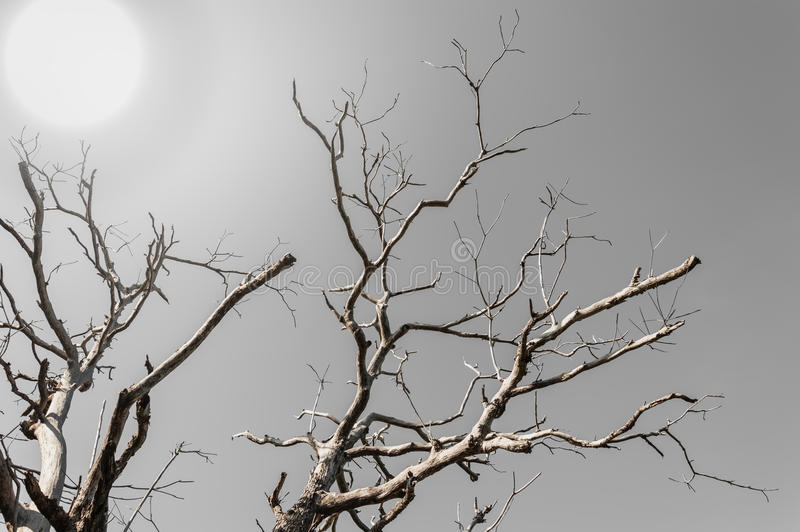 Branch treee with over light sun. In dark tone royalty free stock image