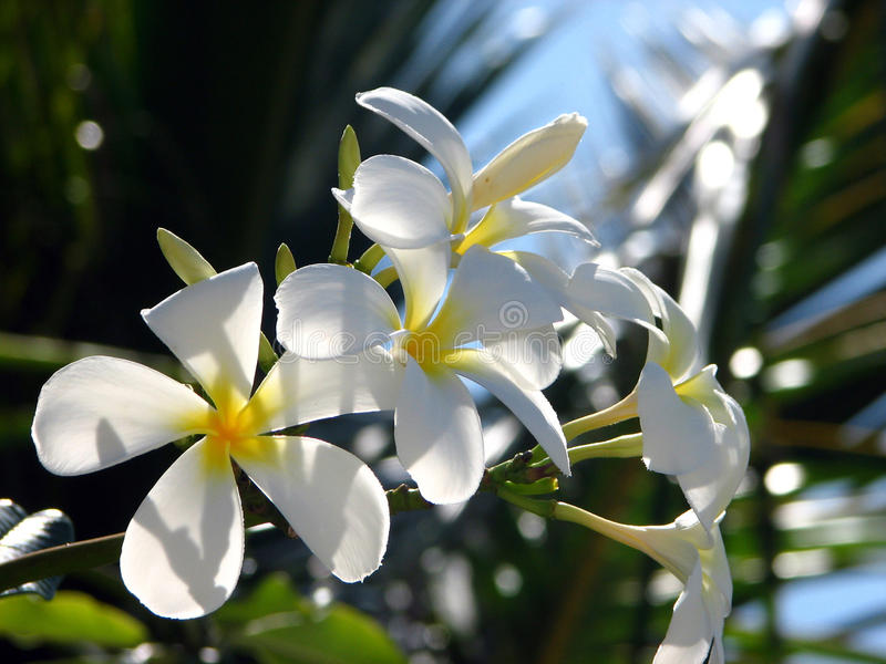 Branch of Tropical Flowers stock image