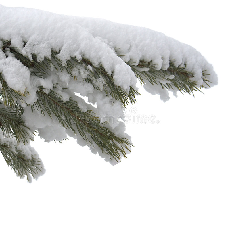 Branch under snow royalty free stock images
